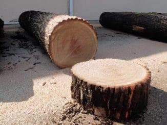 Nur wenige Bäume eignen sich zur Herstellung von Furnier.