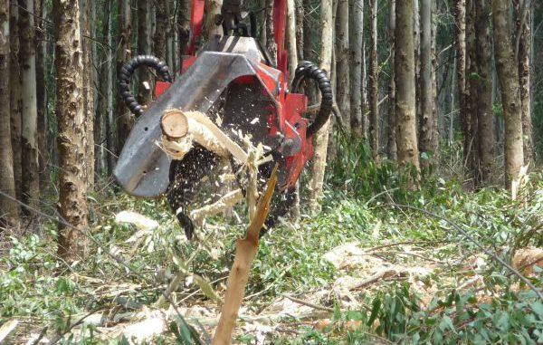 Direkt im Wald verbleibende Rinde stärkt die Bodenfruchtbarkeit. Foto: Hochschule Weihenstephan-Triesdorf