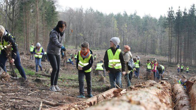 Die Kinder der Entdecker-Grundschule Gera hier beim Pflanzen der Jungbäume. (Foto: Stadt Gera/CHeinrich)